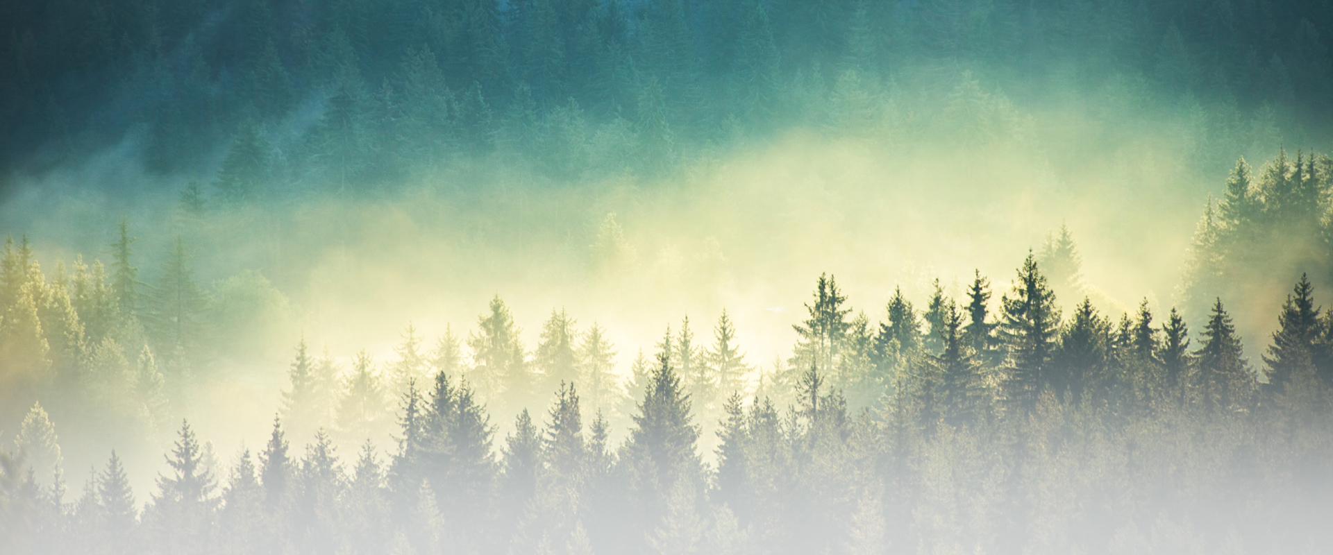 Mist coming off a green forest